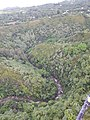 Starr-141014-2246-Caesalpinia decapetala-aerial view with stream-Kakipi Gulch Haiku-Maui (25129035602).jpg