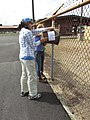 Starr-170824-0433-Cenchrus ciliaris-Noe and Kim setting up bee monitoring stations-Kahului Airport-Maui - Flickr - Starr Environmental.jpg
