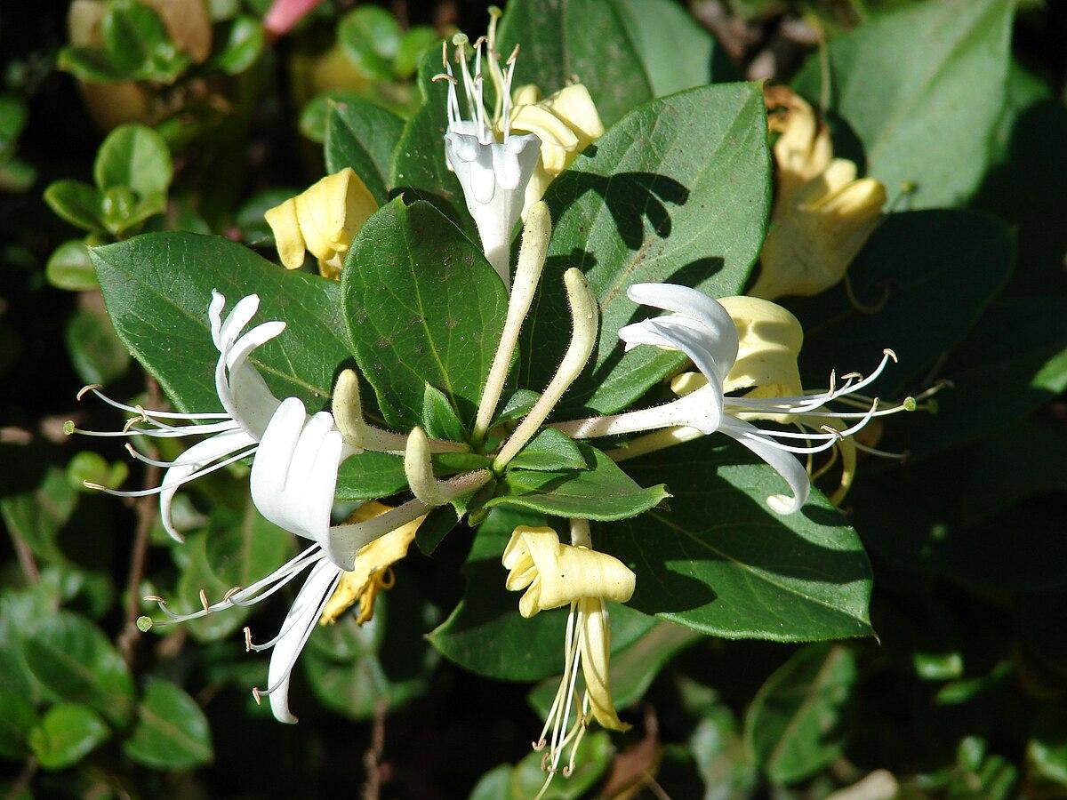 Floral scent