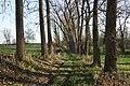 Steenbergse bossen 09.jpg