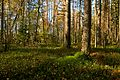 Store Mosse forest.jpg