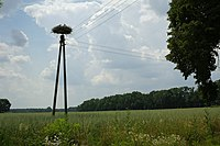 Stork-nest-lodzkie-poland 24.jpg