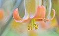 Succulent Orange Bell.JPG