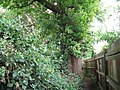 Sweet Chestnut tree and fencing restrict width of path - geograph.org.uk - 1342509.jpg