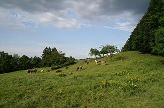Economy of Switzerland - Swiss free-range cattle.