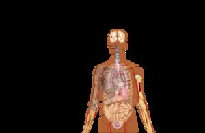 COVID-19 symptomy