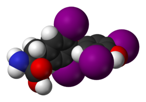 Thyroid hormones - The structural formula (left) and a space-filling model (right) of (S)-thyroxine (T4.)