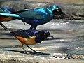 Tanzania 2987 Nevit.jpg