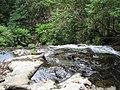 Tarra Falls, Tarra- Bulga NP, VIC Australia.jpg