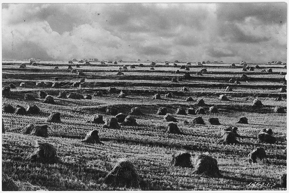 Terraced hay field - NARA - 286147