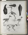 Thèbes. Hypogées. Momies d'oiseaux et squelettes de momies (NYPL b14212718-1267984).tiff