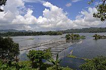 The Placid Lake of Lake Sebu.JPG