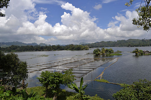 The Placid Lake of Lake Sebu