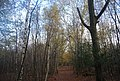 The Wealdway, Five Hundred Acre Wood - geograph.org.uk - 1584979.jpg