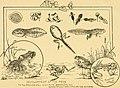 The aquarium (1897) (19739154472).jpg