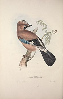 The birds of Europe (1837) (14751675612).jpg