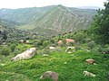 The green ferdjioua Mountains.jpg