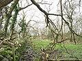 The lower part of the Cefn Gwyn path - geograph.org.uk - 361188.jpg