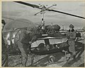 The operation of a new litter designed to be attached to Bell helicopters (SC 355450), National Museum of Health and Medicine (3300114164).jpg