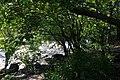 The river through the foliage (20564382298).jpg