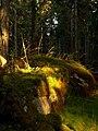 Torpwoods.jpg