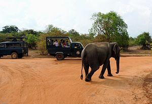 Tourism Yala National Park