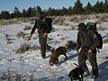 Tracking Mountain Lions with Hounds.jpg