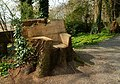Tree seat, Killynether Wood - geograph.org.uk - 773621.jpg