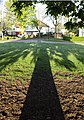 Tree shadow Chorltonville.jpg