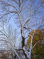 Trees in Hanger Wood, Cadmore End - geograph.org.uk - 1033957.jpg