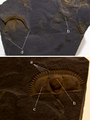 Trinucleus fimbriatus.png