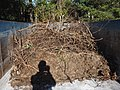 Truck bed full of dry twigs.jpg