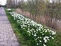 Uithoorn, Netherlands - panoramio (23).jpg
