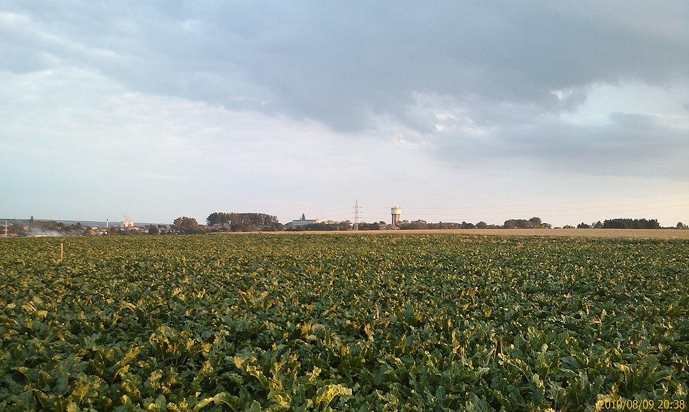 Un champs avec le chateau d'eau de Courcelles au loin