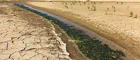 Uniek door eb en vloed steeds wisselend kweldergebied. Locatie, Noarderleech Provincie Friesland 46.jpg
