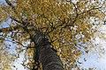 Ural Autumn (85550313).jpeg