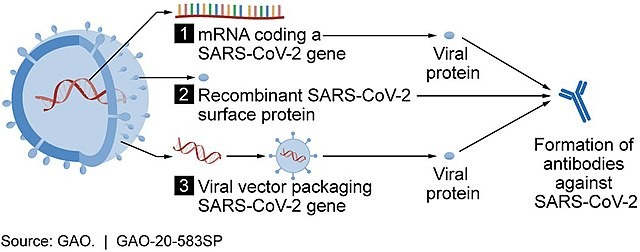Vaccine candidate mechanisms for SARS-CoV-2 (49948301838).jpg