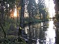 Vantaa river (10-2008) - panoramio - pan-opticon (1).jpg