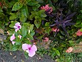 Varias flores de diversa especie.jpg