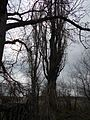 Verhuny, Poltavs'ka oblast, Ukraine, 37873 - panoramio (71).jpg