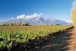 Chilean wine - View of Chilean vineyards in the foothills of the Andes.