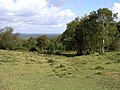 View down Two Beeches Bottom, New Forest - geograph.org.uk - 60042.jpg
