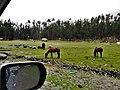 Vishu forest near Kalam, KPK.jpg