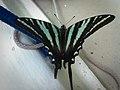 Visiting Butterfly (7315905050).jpg
