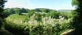 Vue sur la forêt, Miramont de Comminges.png