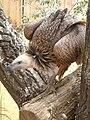 Vultures02.JPG