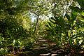Waimea Valley Park (12604401583).jpg