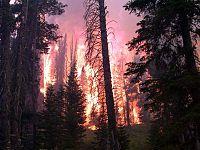 Die Zunahme von Waldbränden gehört nach gängigen Szenarien zu den Auswirkungen des Klimawandels