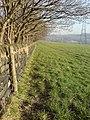 Wall by a field, Newlay - geograph.org.uk - 787742.jpg