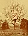 Walnut growing in Oregon (1910) (14735280566).jpg